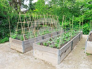 raised-garden-frames-25710101[1]